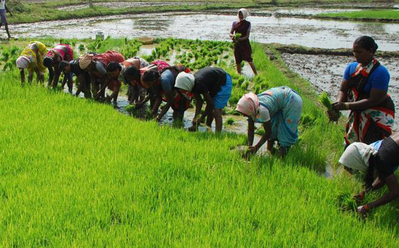 Cabinet approves MoU between India and Philippines on agriculture ...